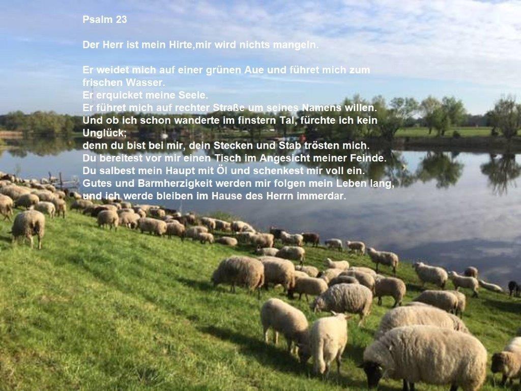Psalm 23 mit Schafherde am Wasser